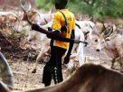 GTI Report: Herders killed more Nigerians in 2018 than Boko Haram
