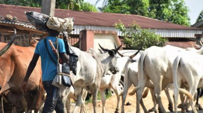 Herdsmen Killings: Presidency says politicians are using criminals to perpetuate murderous activities