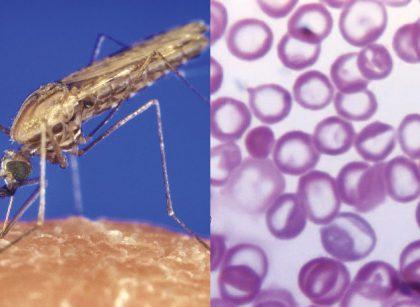 New method to block malaria transmission identified - Study/newsheadline247