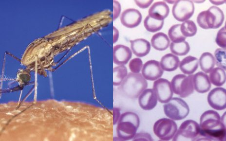 New method to block malaria transmission identified - Study/newsheadline247