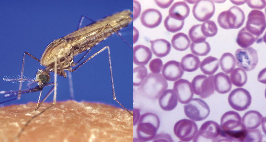 New method to block malaria transmission identified – Study