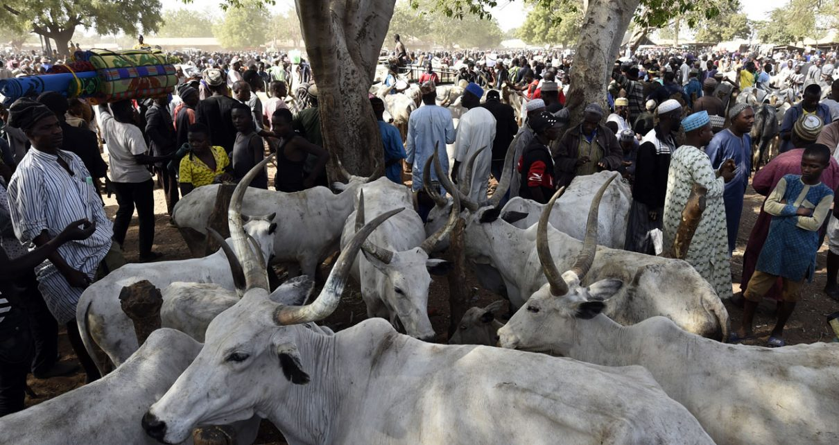 It's an insult to invite us for roundtable meeting with Miyetti herders - Southern, Middle Belt leaders/newsheadline247.com