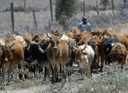 Come back home, Northern elders urges herdsmen to relocate from the south/newsheadline247