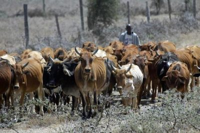 Come back home, Northern elders urges herdsmen to relocate from the south