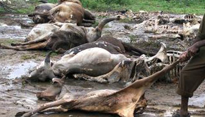 Ondo Govt. bans sales of meat as lightning kills cows again/newsheadline247