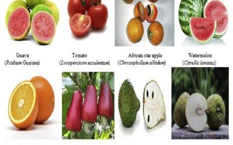 Coronavirus: Eat 'agbalumo', guava, other fruits to boost immune system – Researchers - newsheadline247.com