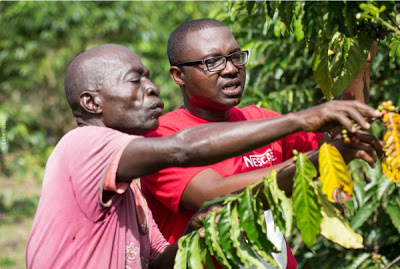 World Coffee Day: Nestlé Helps Boost Coffee Production in Africa - newsheadline247.com